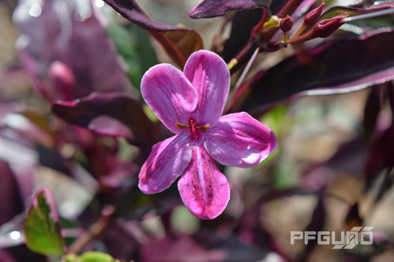 Light Purple And White Flower