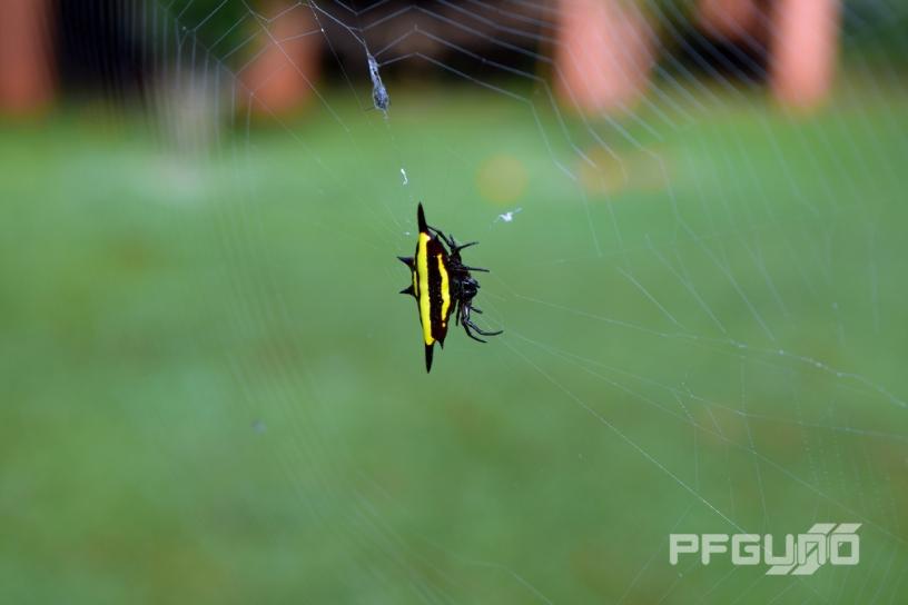Wide Spider [SHOT 2]