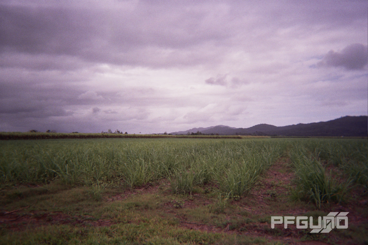 The Mountain And The Sugarcane [SHOT 2]