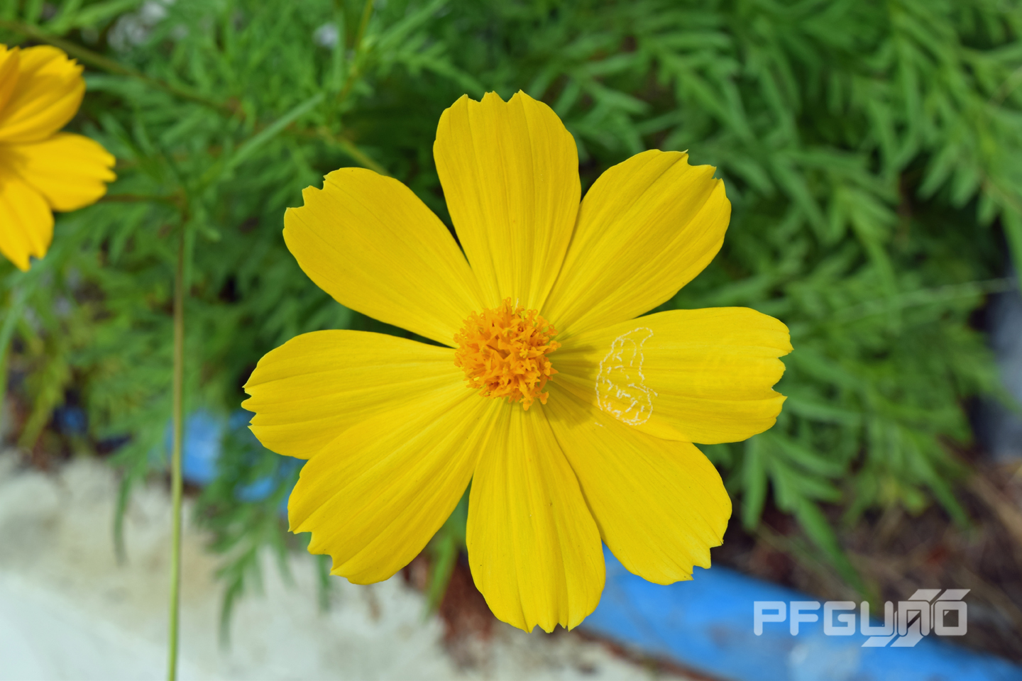 Yellow Petal Flower