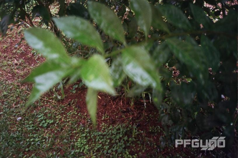 Blurring Leaves [SHOT 2]