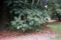 Blurry Green Bush