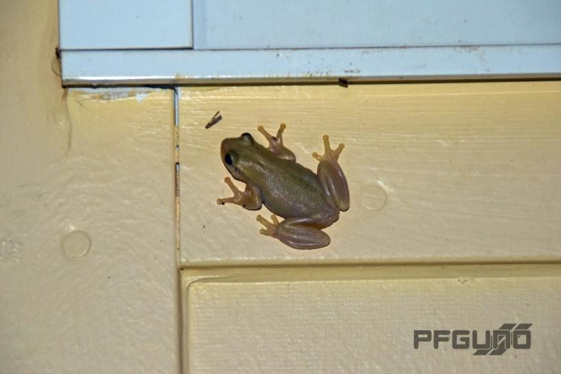 Brown Flog Under The Windowsill