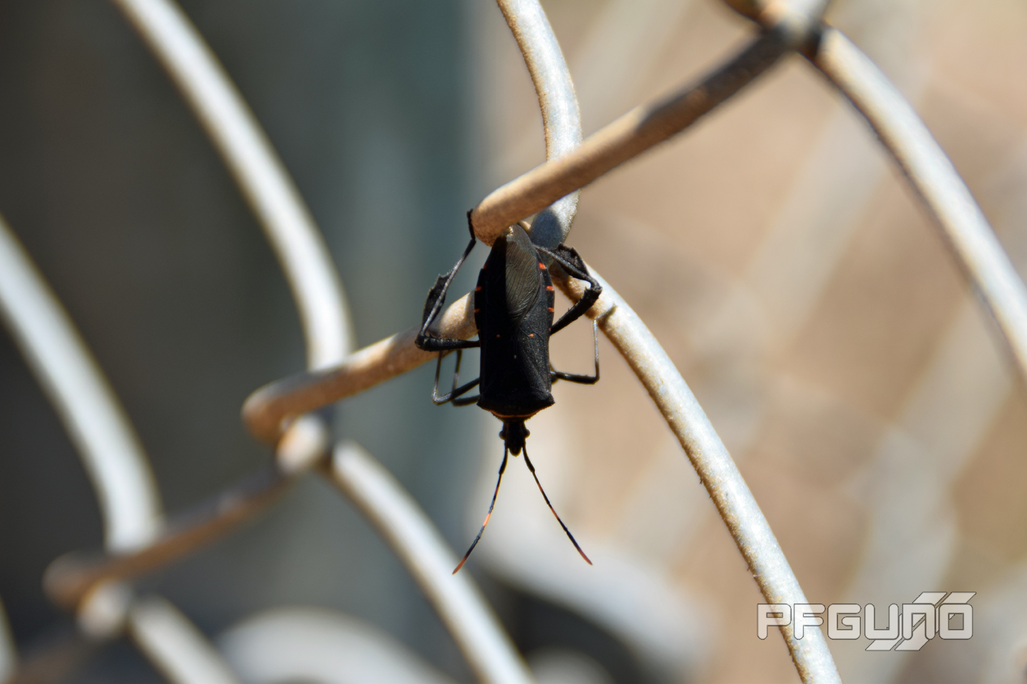 Bug On The Metal Wires