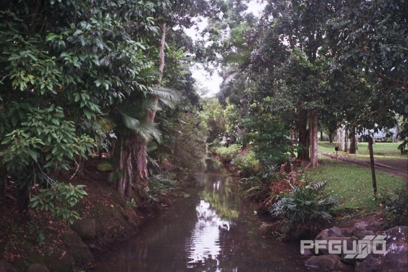 Creek Between The Trees [SHOT 1]