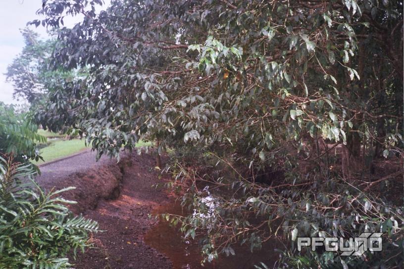 Creek Between The Trees [SHOT 2]