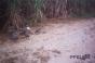 Eight Guineafowl [SHOT 2]