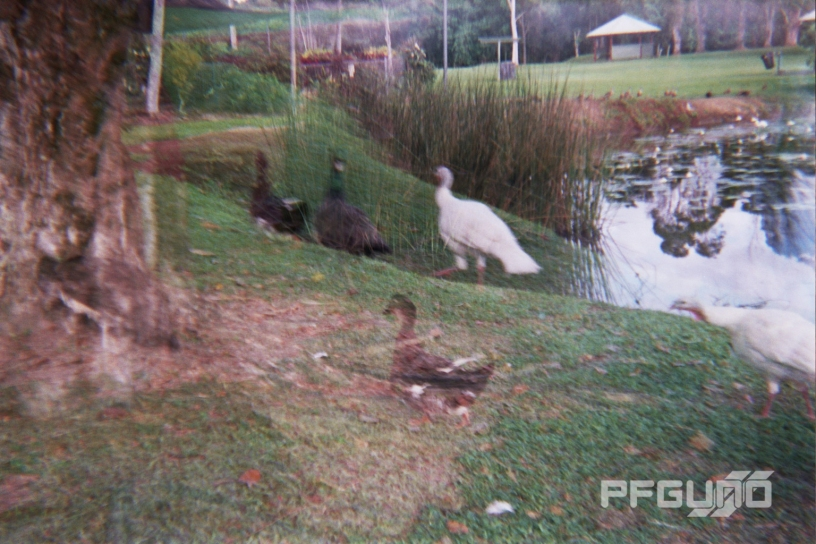 Ghost Turkey's And Duck