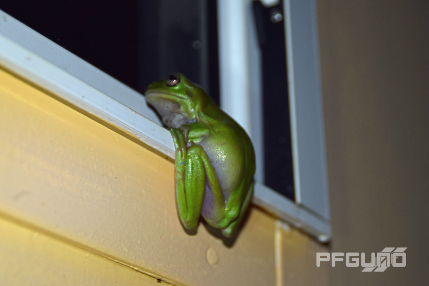 Green Frog On The Windowsill [SHOT 1]