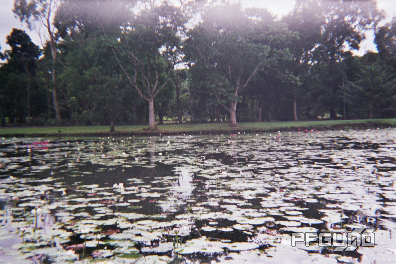 Lily Pads Everywhere
