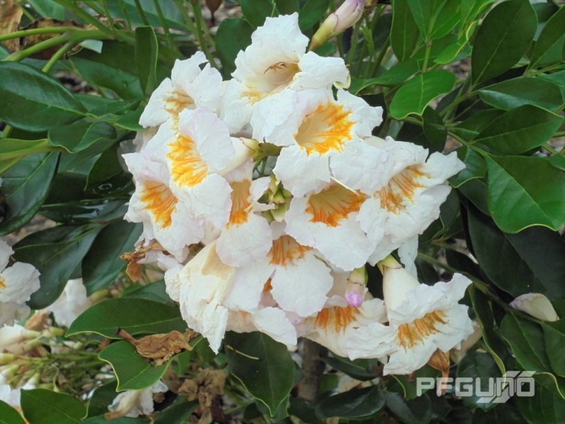 So Many White Flowers