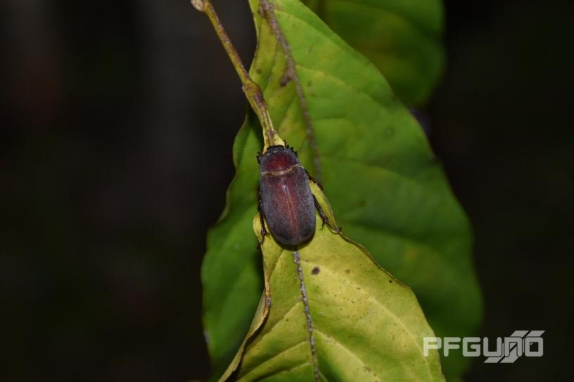 Beetle [SHOT 1]