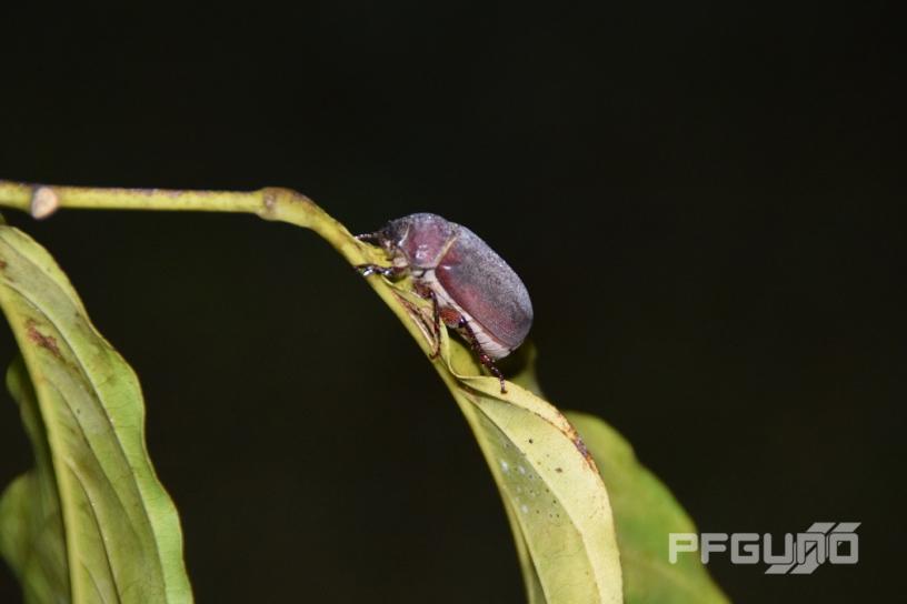 Beetle [SHOT 2]