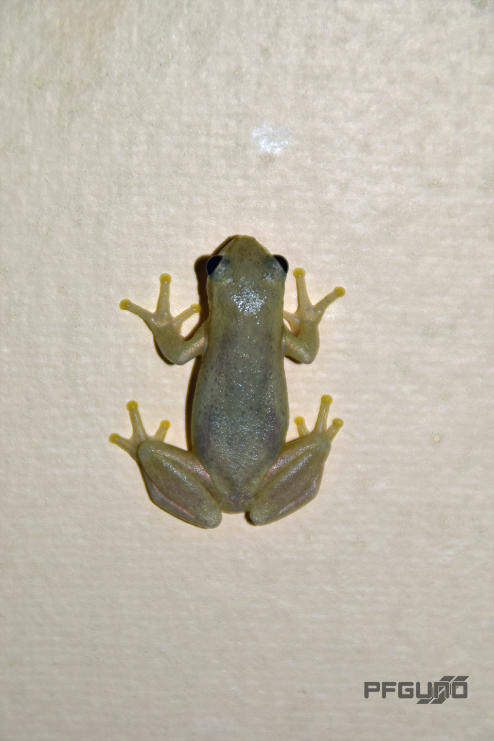 Brown Frog On The Wall