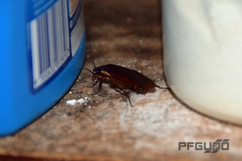 Cockroach [SHOT 1]