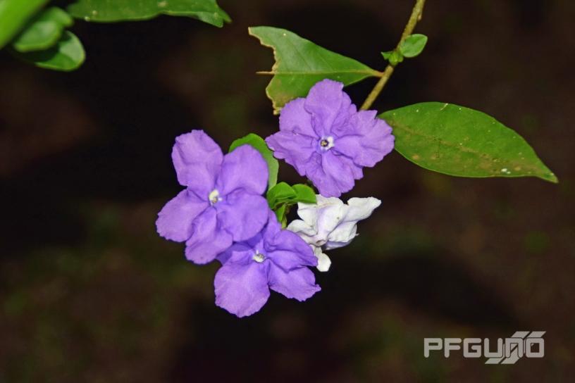 White Among The Purple