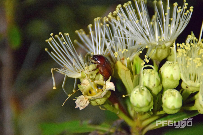Beetle Eating Flower