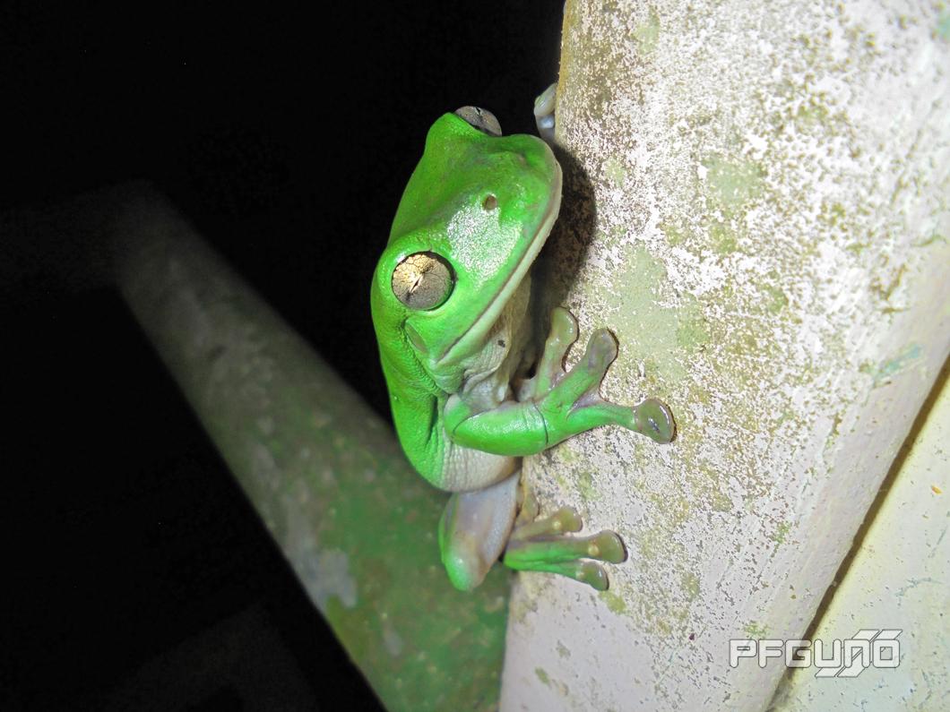 Frog On The Corner