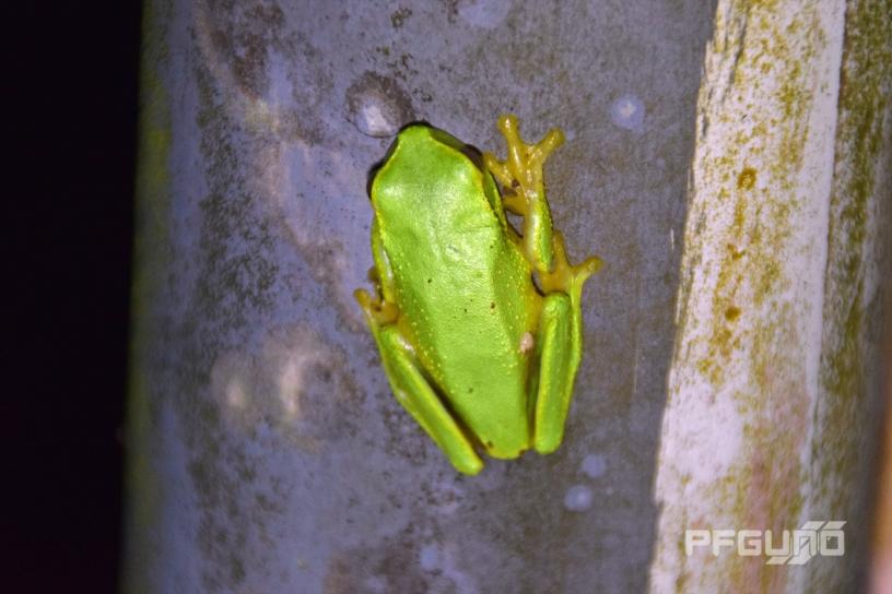 Little Frog [SHOT 2]
