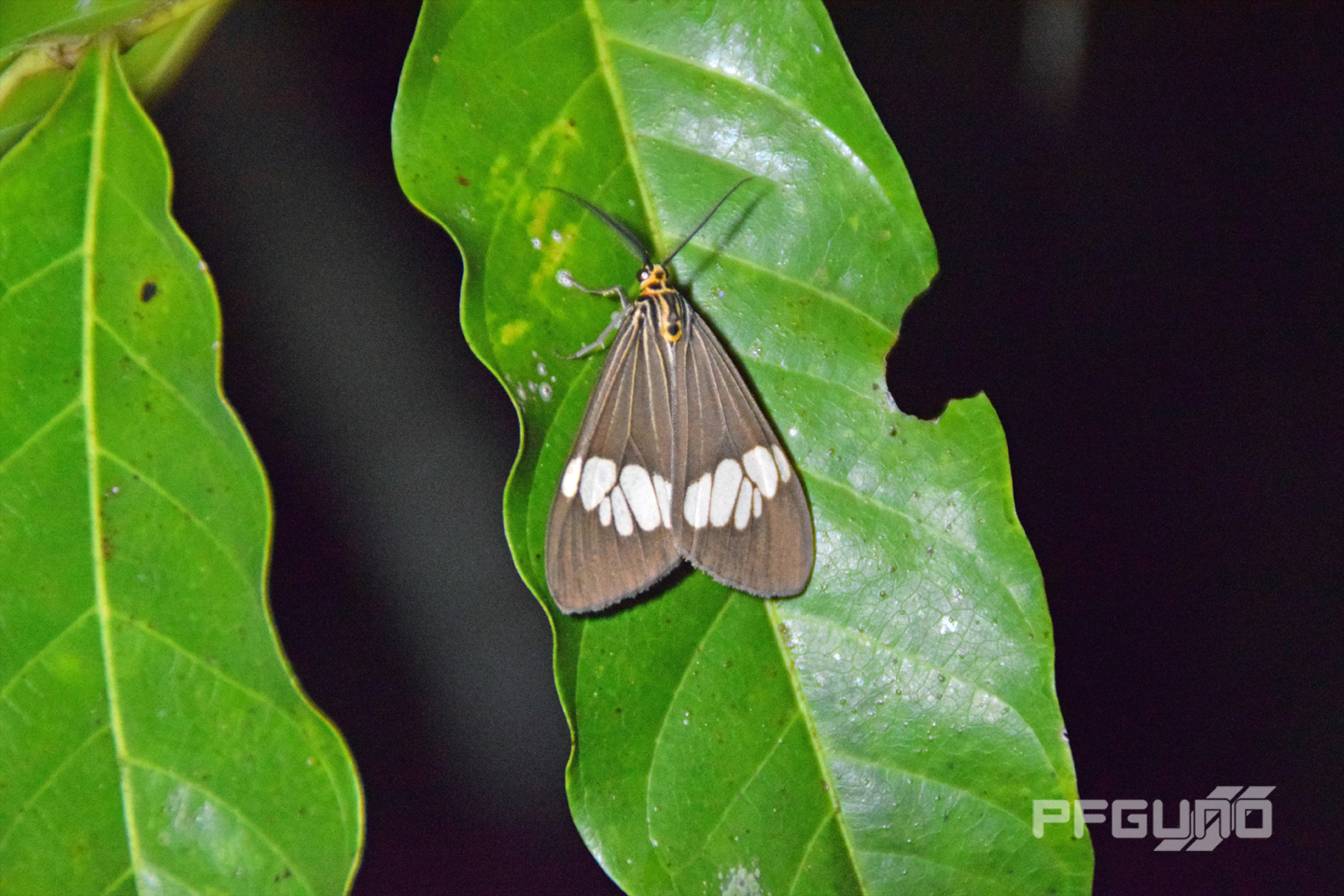 Moth On A Leaf