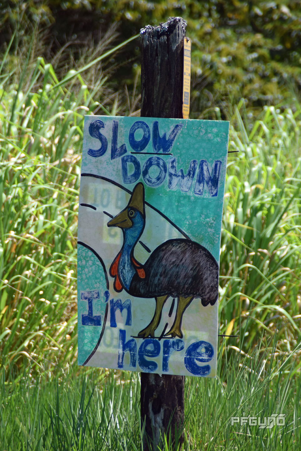 Slow Down, I'm Here