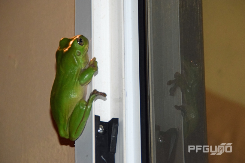 A Frog Reflection