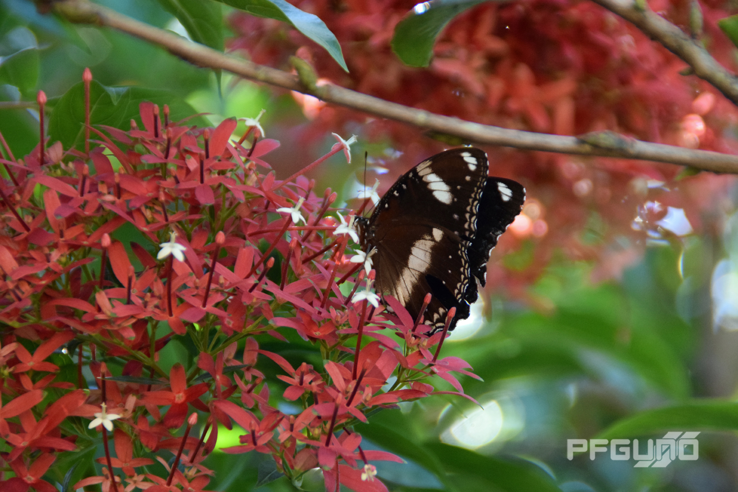 Butterfly And The Red Flowers [SHOT 1]