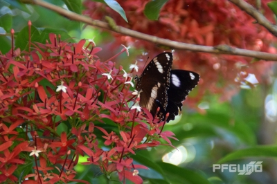 Butterfly And The Red Flowers [SHOT 2]