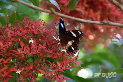 Butterfly And The Red Flowers [SHOT 3]