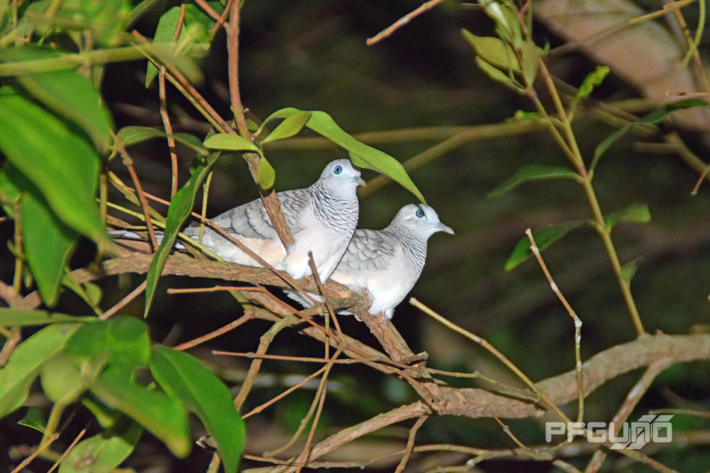 Doves Side By Side [SHOT 1]