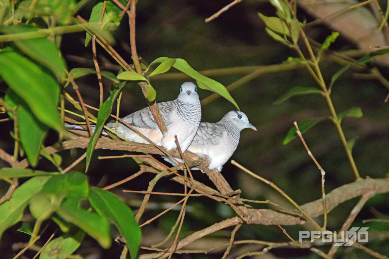 Doves Side By Side [SHOT 2]
