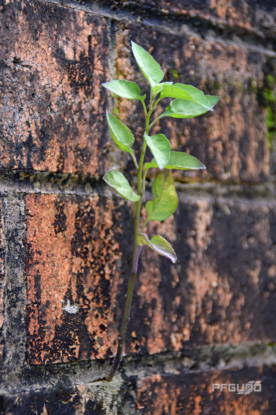 Growing Out Of A Wall