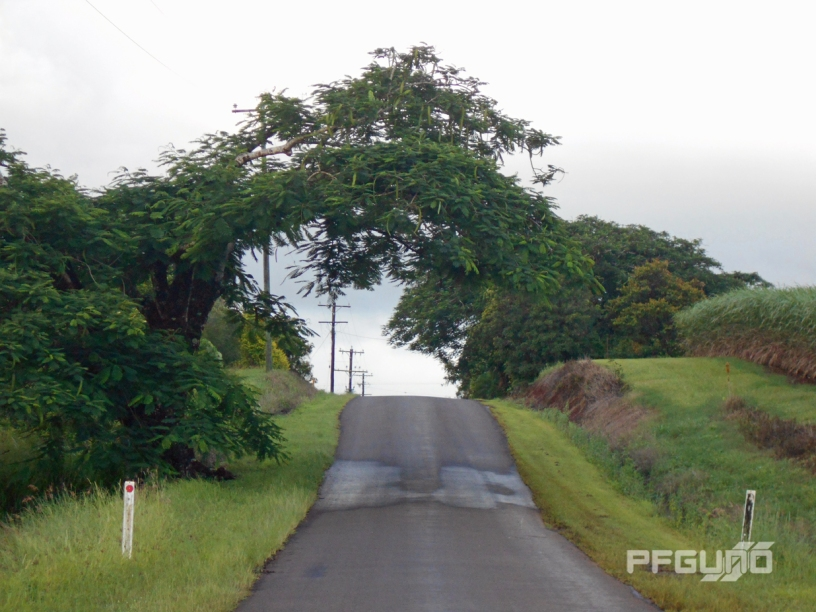 Tree Branch Over Road