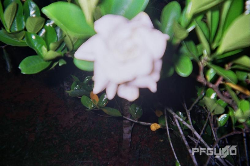 Blurry Flower [SHOT 1]
