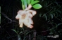 Blurry Flower [SHOT 2]