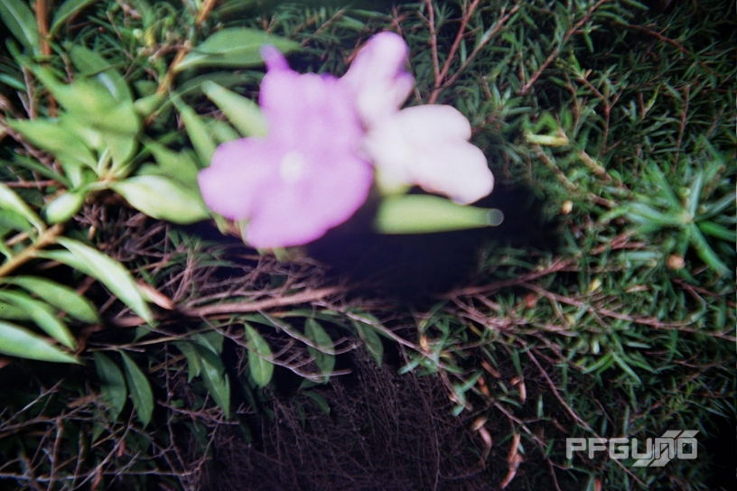 Blurry Purple And White Flowers