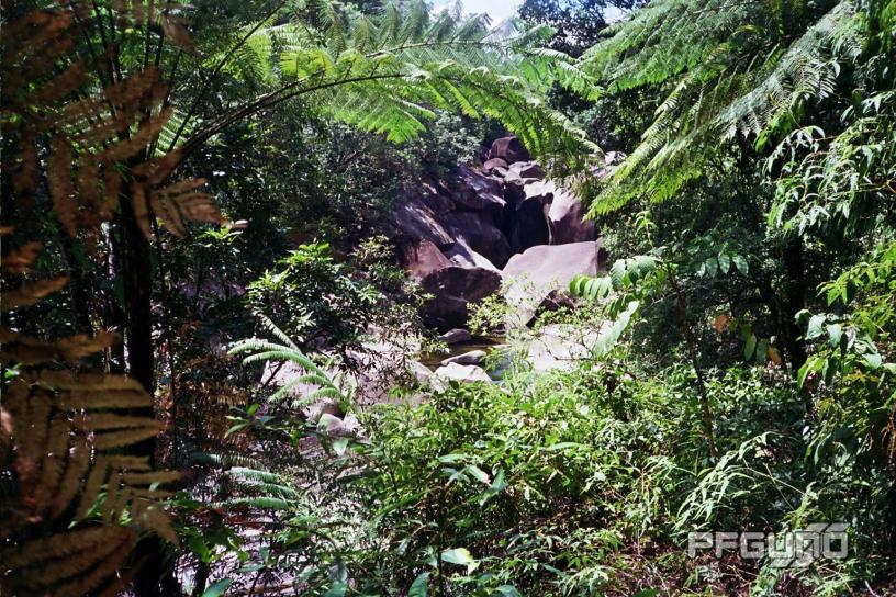 Boulders Among The Plants