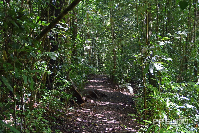 Dirt Path Through The Rainforest