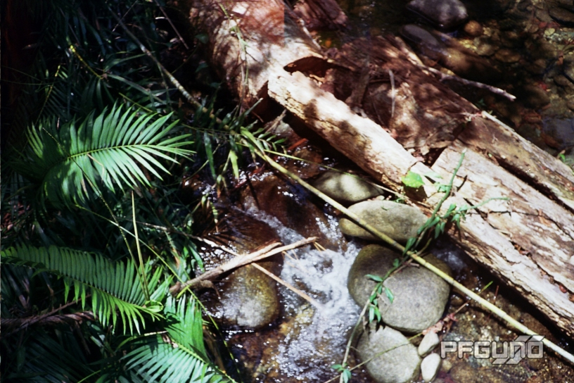 Log Over The Stream