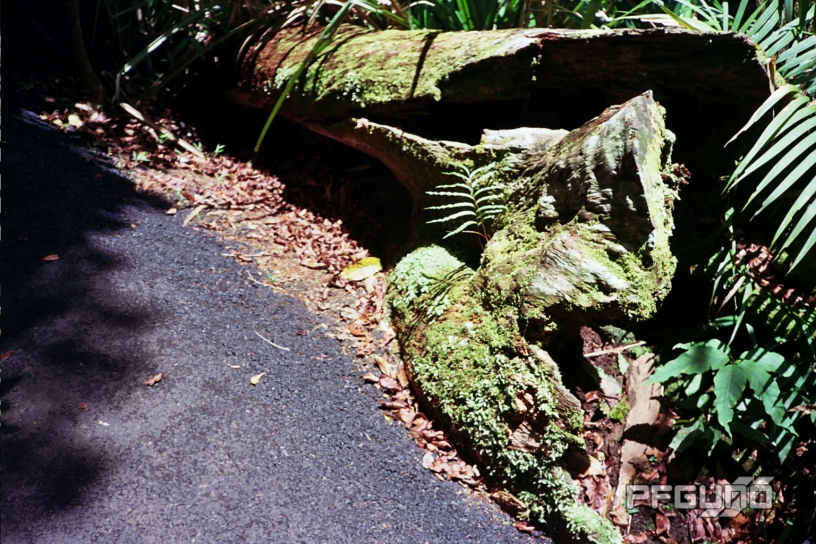 Moss Log