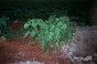 Plant At Night