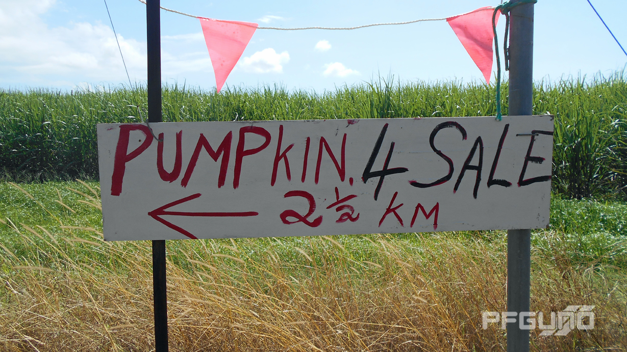 Pumpkin 4 Sale