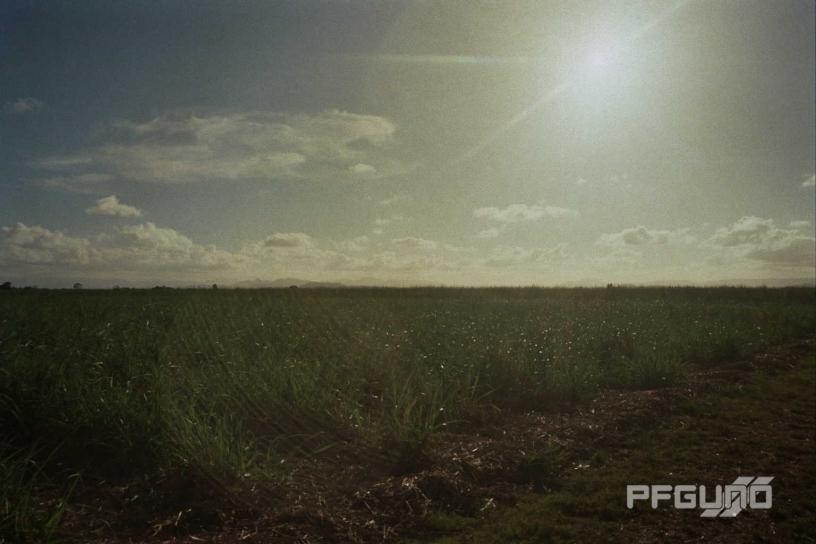 Sunshine Over Cane Fields [SHOT 1]