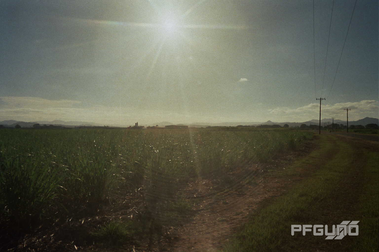 Sunshine Over Cane Fields [SHOT 2]