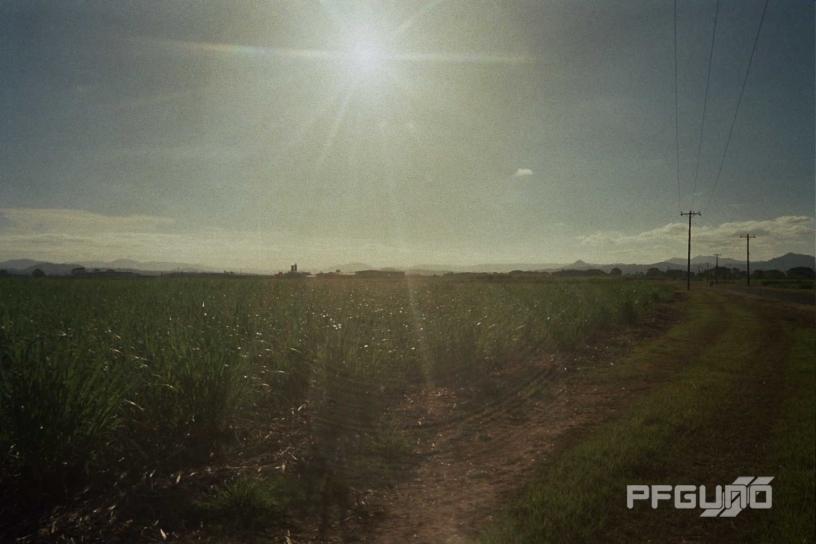 Sunshine Over Cane Fields [SHOT 2]