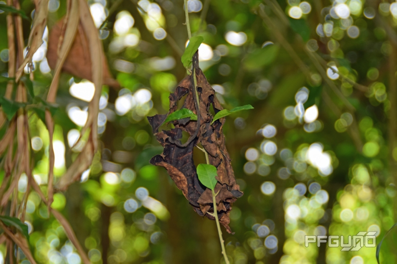 Brown Leaf On The Vine