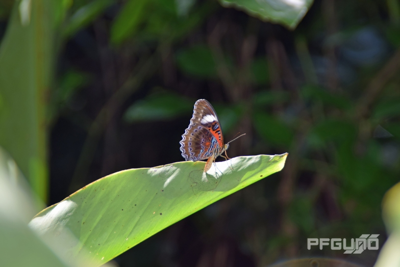 Butterfly On The Leaf