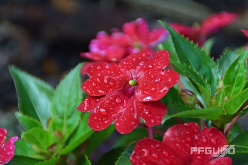 Flower With Water Droplets