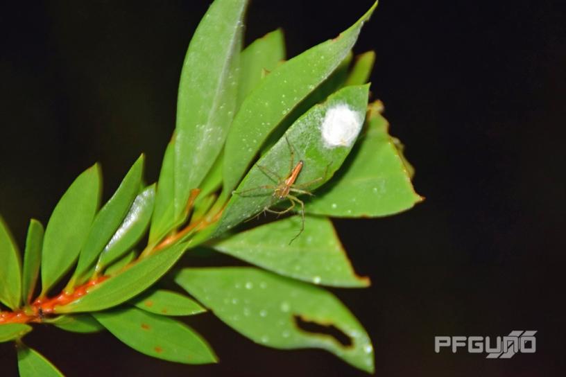 A Bug On The Leaf