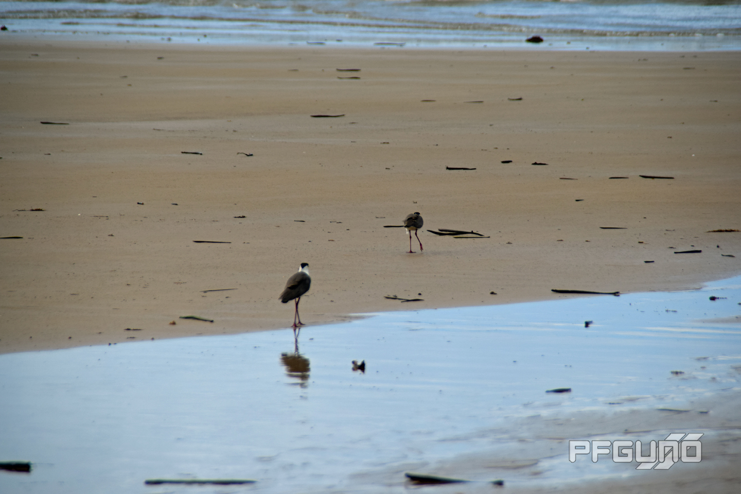 Birds On The Sand